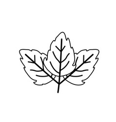 Sketch contour of wavy three leaves plant vector