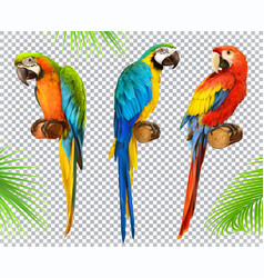 ara parrot macaw photo realistic 3d icon set vector image vector image