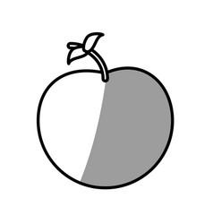 apple fruit picnic shadow vector image