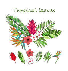 Floral tropical leaves vector