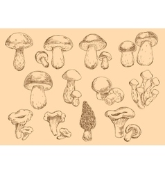 Fresh edible mushrooms engraving sketch symbols vector image