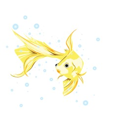 Goldfish with no background vector
