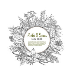 herbs and spices farm store sketch poster design vector image