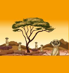 Scene with meerkats in field vector