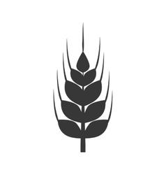 Wheat ears icon Grain design graphic vector image