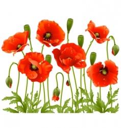Spring flowers poppy vector
