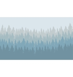wild coniferous forest vector image vector image
