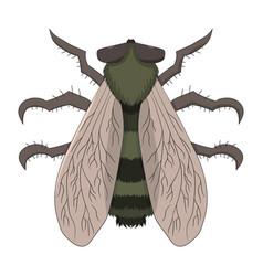 big fly the tabanus drawing vector image