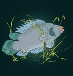 Fish in seaweed vector image