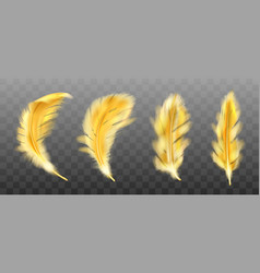 Golden yellow fluffy feather realistic vector