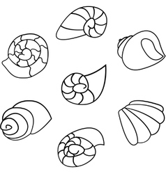 Set of shell on white background vector image