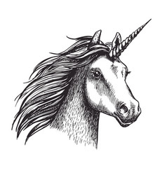 Unicorn sketch mystic magic horse vector
