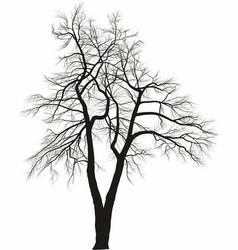 Acacia two trees vector