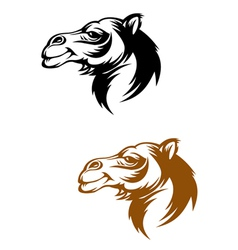 Camel head vector