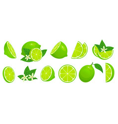 cartoon lime limes slices green citrus fruit vector image