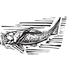 Dunkleosteus fossil fish vector