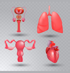 internal organs realistic icon set in vector image