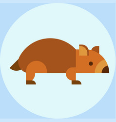 Wombat national park australia herbivore fauna vector