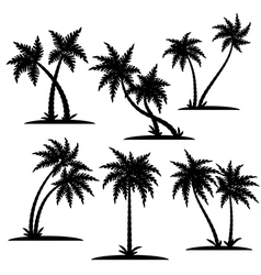 Palm silhouette set vector image vector image