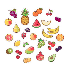 collection fruits vector image