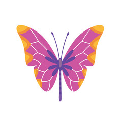 exotic color butterfly hand drawn moth wings vector image