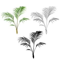 Palm decoration house plant tropical plant vector