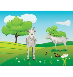 Goat and Green Lawn3 vector image