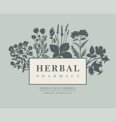 Banner for herbal pharmacy in retro style vector
