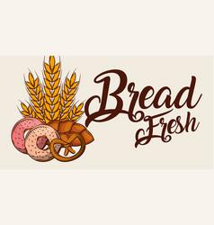bread fresh donuts pretzel wheat banner vector image
