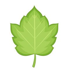 hawthorn leaf icon cartoon style vector image