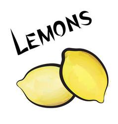 lemon sign isolated lemon fruit tag fresh farm vector image