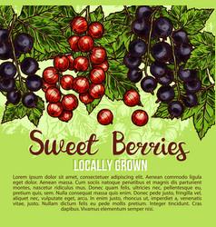 natural fresh sweet berries sketch poster vector image