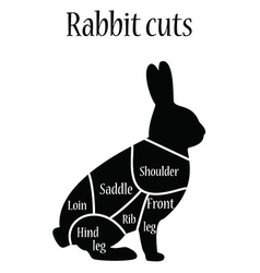 Rabbit butcher chart vector image