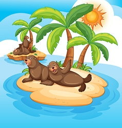 Seals living on island vector image