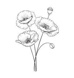 vintage poppy vector image