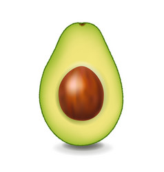Avocado isolated with white background vector