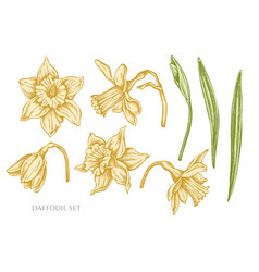 collection of hand drawn pastel daffodil vector image