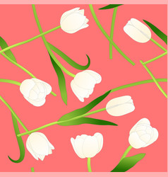 white tulip on pink background vector image