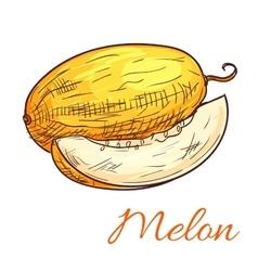 Melon color sketch icon vector image