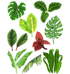 colorful set of tropical leaves vector image vector image