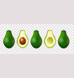Banner with realistic avocado set isolated vector