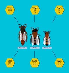Bee info vector