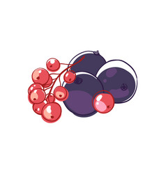 Black and red currants isolated icon vector