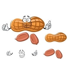 Cartoon peanut in shell with kernels vector image vector image