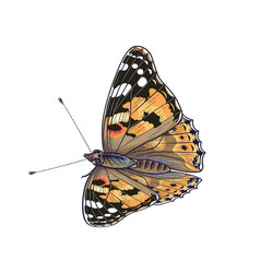 colorful painted lady butterfly vector image