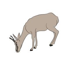 gazelle drawing color vector image