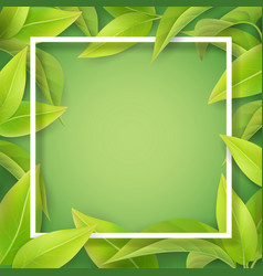 green mellow leaves and white frame vector image