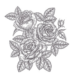 hand drawn rose flowers and leaves vintage floral vector image
