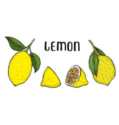lime or lemon set vector image