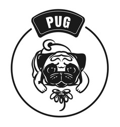 pug sniffs chamomile icon simple style vector image